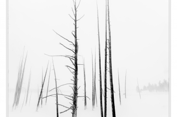 Paul Anderson-burnt  trees